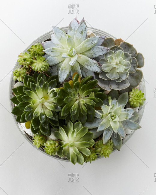 Overhead view of a beautiful terrarium with succulents