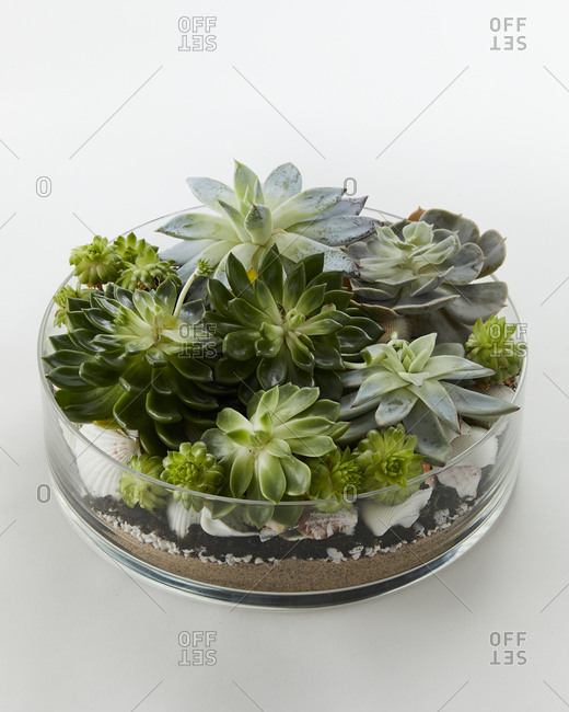 Close up of a beautiful terrarium with succulents