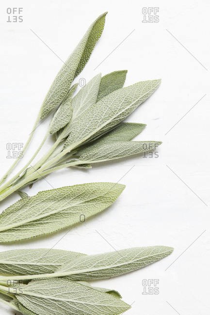 Sage leaves on white background