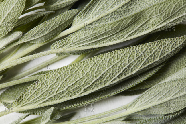 Close up of sage leaves