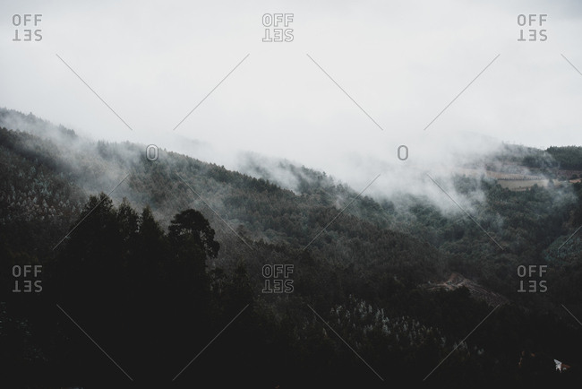 Landscape of hills covered with lush greenery and thick white mist