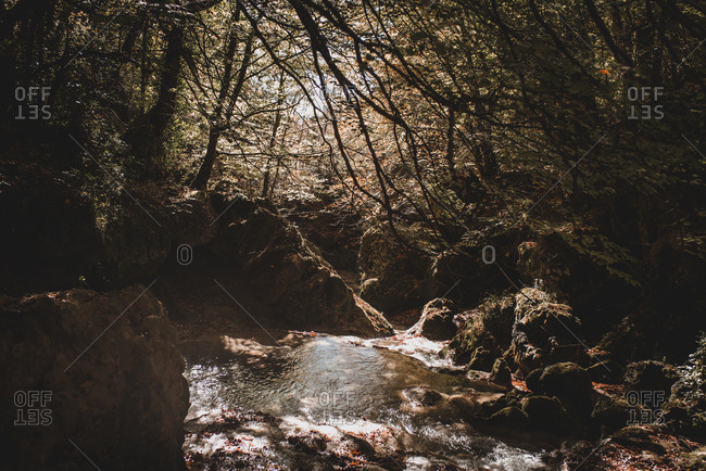 Tiny creek flowing through magnificent autumn forest in Navarre, Spain