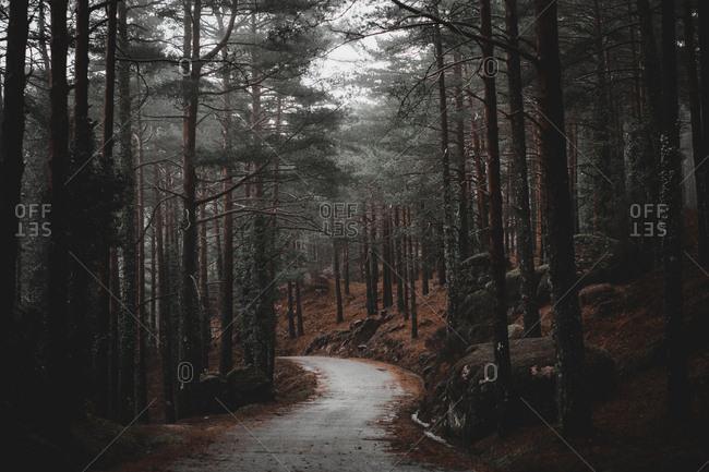 Narrow asphalt road going through dark conifer forest in Portugal countryside