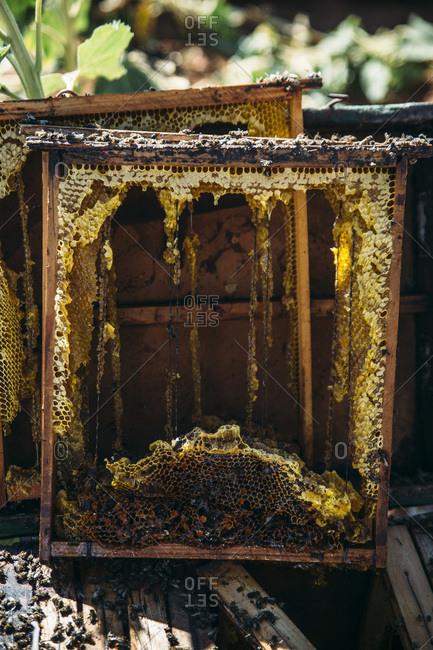 Beekeeper working collect honey