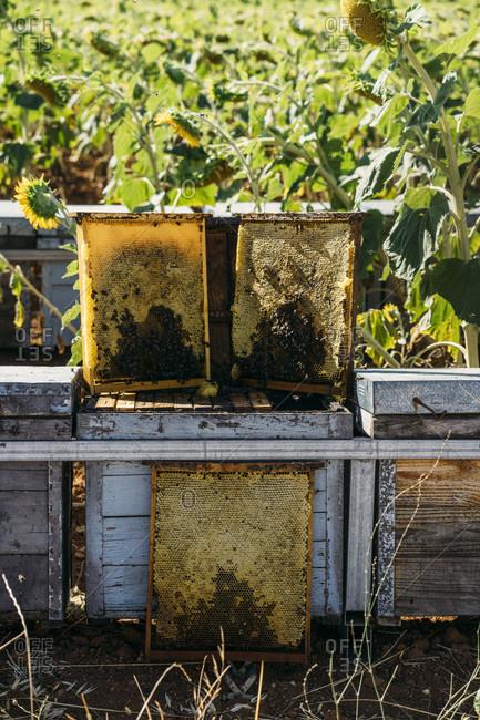 Honey bee frames
