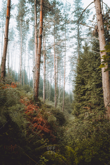 Calm green forest in daylight