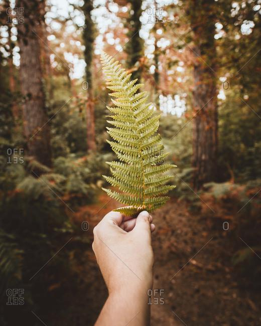 Crop hand of unrecognizable person holding green leaf in calm forest in Pais Vasco, Basque country, Spain