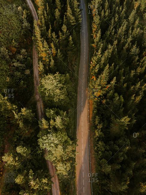 Asphalt and rural rod in woods