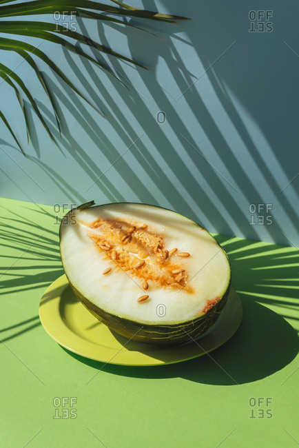 Half Melon toad skin, Colorful summer theme. in blue and green background, shadows of palm leaves