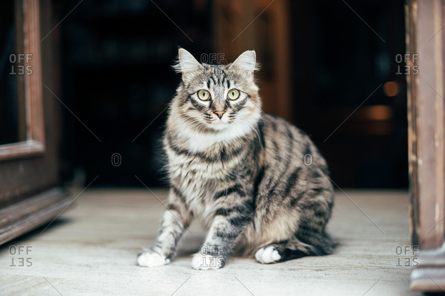 Cute furry cat with green eyes sitting on street and looking away