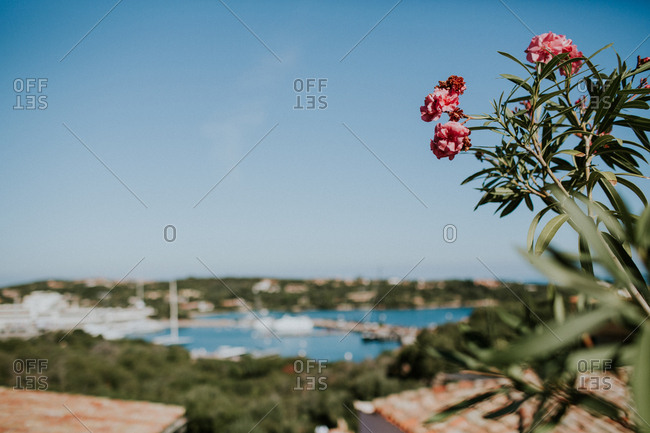 Flowers overlooking a lake in Sardinia