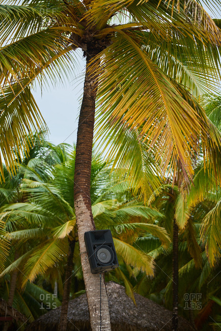 Big music column hanging on the palm tree trunk against tropical jungles on the beach of Saona Island in Dominican Republic. No harsh sunlight only blue cloudy sky. Rainy day.