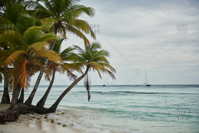 Photo of palm trees growing on the beach against Caribbean Sea. Shot is made in cloudy and rainy day. Sky is moody. Sea has some waves. Shot made on Saona Island in Dominican Republic.