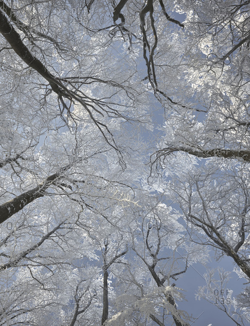 Hoarfrost in the Viennese wood, Badener Lindkogel, Lower Austria, Austria