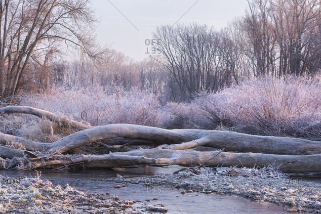Hoarfrost in the Schwechat, Baden near Vienna, Lower Austria, Austria