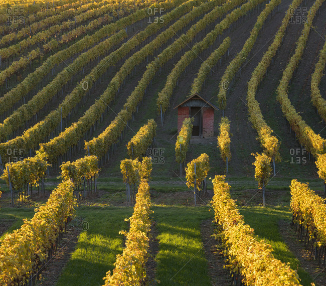 autumnal vineyards in the Termenregion, Baden near Vienna, industrial district, Lower Austria, Austria