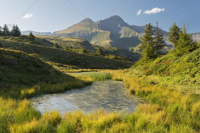 Schwarzhorn, Gross Scheidegg, Grindelwald, the Bernese Oberland, Switzerland