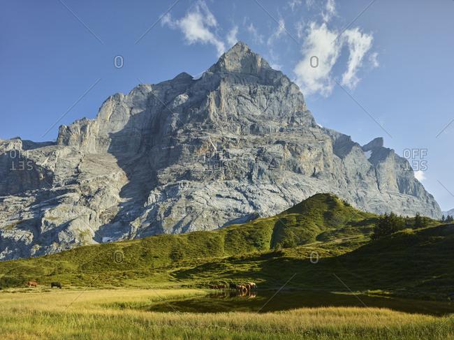 Wetterhorn (mountain), Gross Scheidegg, Grindelwald, the Bernese Oberland, Switzerland
