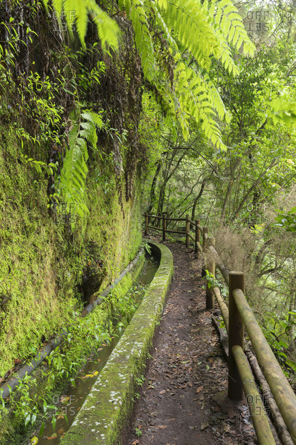 Away along a water channel, Barranco del Aqua, Los Tilos, island La Palma, Canary islands, Spain