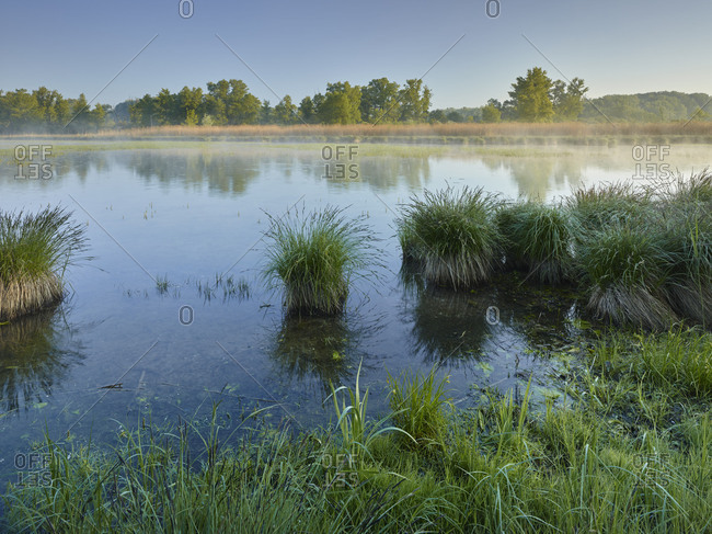 Danube meadows, Lower Austria, Austria