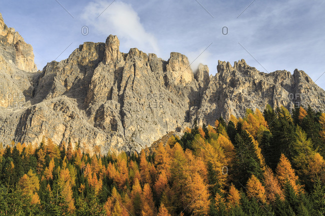 Colorful woods in autumn at Sella Pass. Dolomites Fassa Valley Trentino Alto Adige Italy Europe