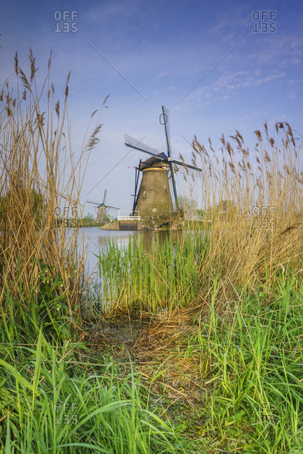 Blue sky and corn ears frame the windmills at Kinderdijk Rotterdam South Holland Netherlands Europe