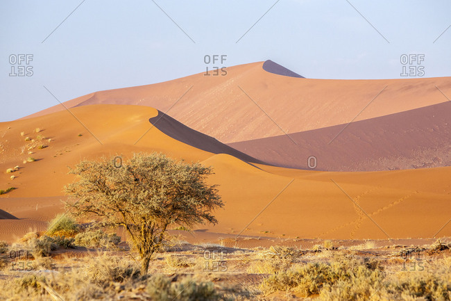 Bushes and dried plants among the dunes shaped by wind Deadvlei Sossusvlei Namib Desert Naukluft National Park Namibia Africa