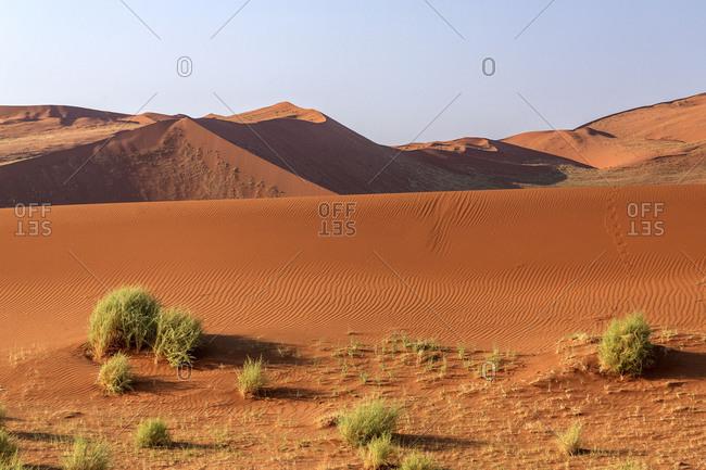 Bushes surrounded by sandy dunes Deadvlei Sossusvlei Namib Desert Naukluft National Park Namibia Africa