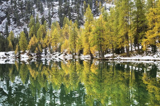 Colorful trees and snowy woods reflected in Lai da Palpuogna Albula Pass Bergun Canton of Graubunden Engadine Switzerland Europe