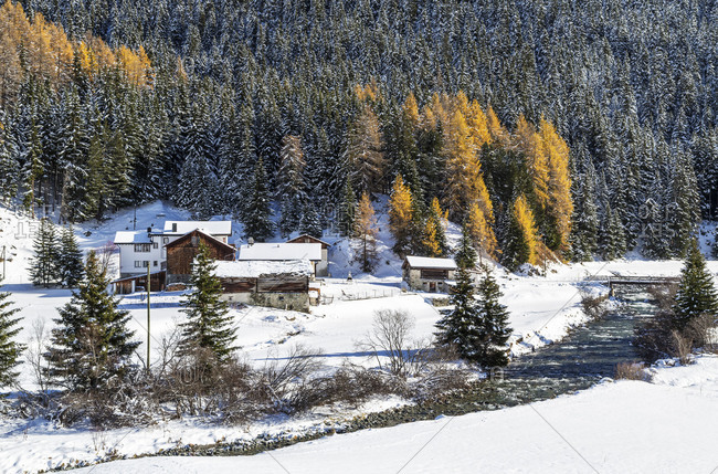 Snowy landscape and colorful trees in the small village of Mulegns Val Sursette Canton of Graubunden Switzerland Europe