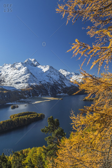 Yellow larches frame the blue Lake Sils and Piz Da La Margna in the background Engadine Canton of Graubunden Switzerland Europe