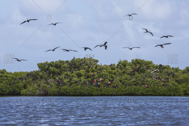 Birds fly on the blue sea in the national Park of Frigate Bird Sanctuary Antigua and Barbuda Leeward Islands West Indies