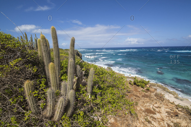 Cactus and plants surround the  turquoise caribbean sea The Cave Antigua Barbuda Leeward Islands West Indies