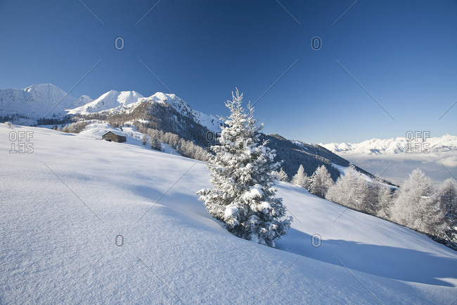 Trees in the snowy landscape of Motta Di Olano Orobie Alps Gerola Valley Valtellina Sondrio province Lombardy Italy Europe