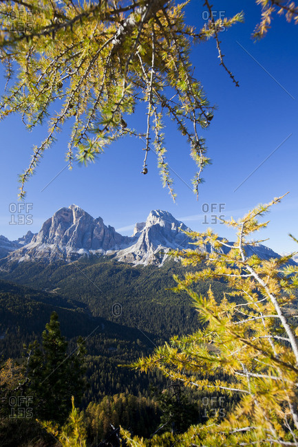 Rocky peaks of Tofane Group framed by yellow larches in autumn Cortina D'Ampezzo Dolomites Belluno province Veneto Italy Europe