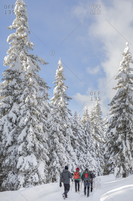 December 17, 2017: Hikers in the snowy forest near the Nemes alm, Sesto, Pusteria valley, Trentino Alto Adige, Italy, Europe