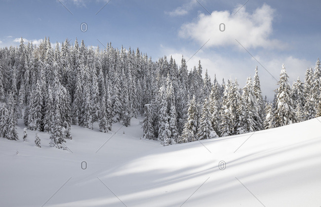 Forest and meadow snowy in the Nemes alp, Sesto, dolomites, Pusteria valley, Trentino Alto Adige, Italy, Europe