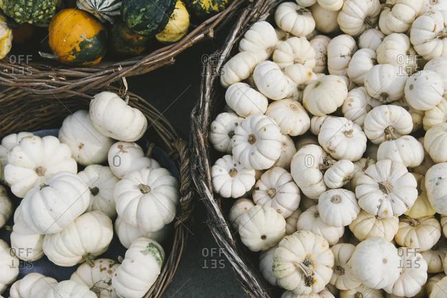 Various colorful autumn pumpkins on farm market.