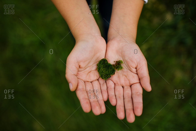Child holding a piece of moss in hands