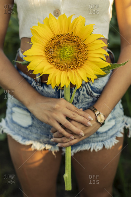 Close-up of woman in a field holding a sunflower