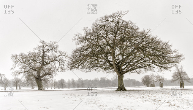 UK- snow-covered winter landscape with bare trees