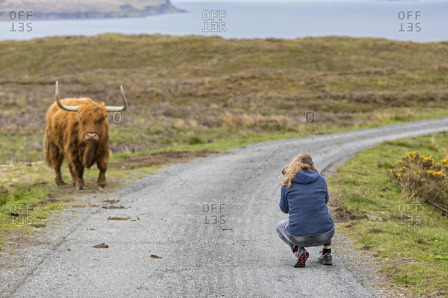 UK- Scotland- Inner Hebrides- Isle of Skye- tourist taking picture of Highland Cattle