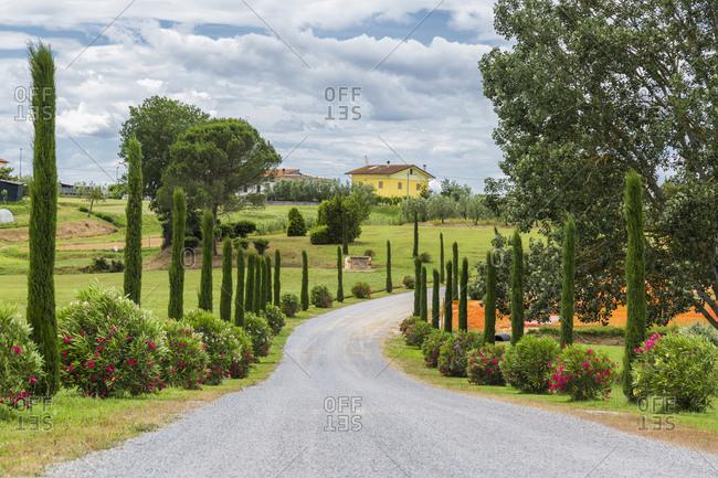 Italy- Tuscany- Monsummano Terme- country road