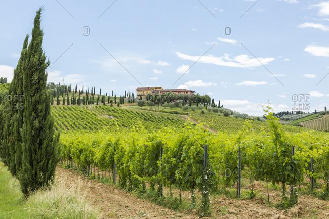 Italy- Tuscany- Monsummano Terme