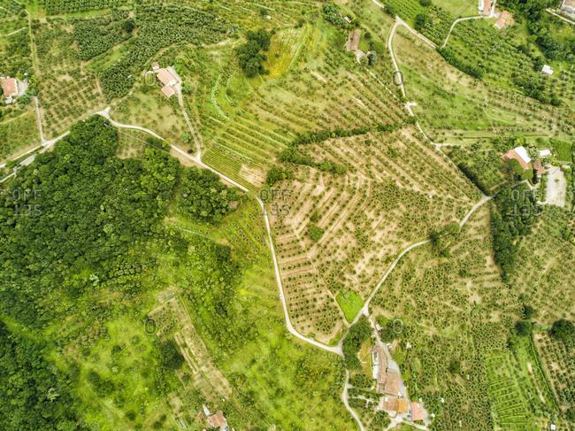 Italy- Tuscany- Aerial view of Monsummano Terme