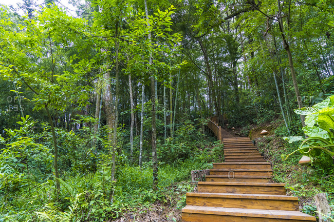 China- Fujian Province- stairs in Niumu forest