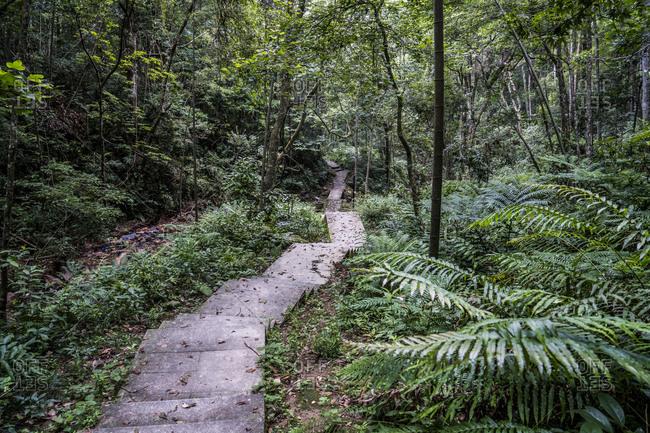 China- Fujian Province- Niumu forest