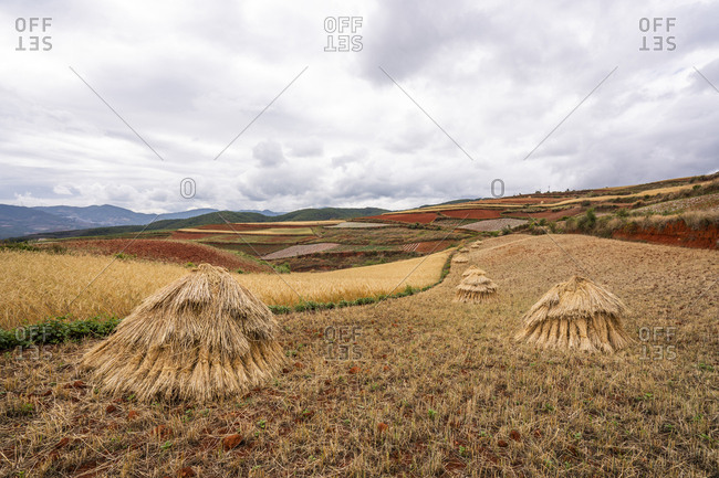 China- Yunnan province- Dongchuan- Red Land- field during harvest