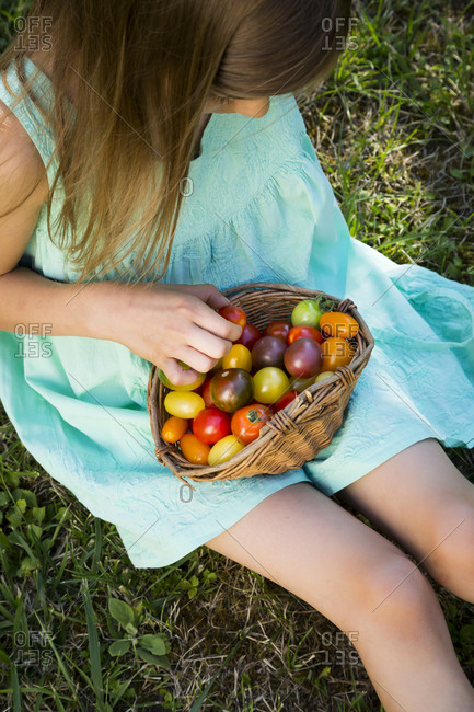 Little girl with basket of Heirloom tomatoes sitting on meadow in the garden