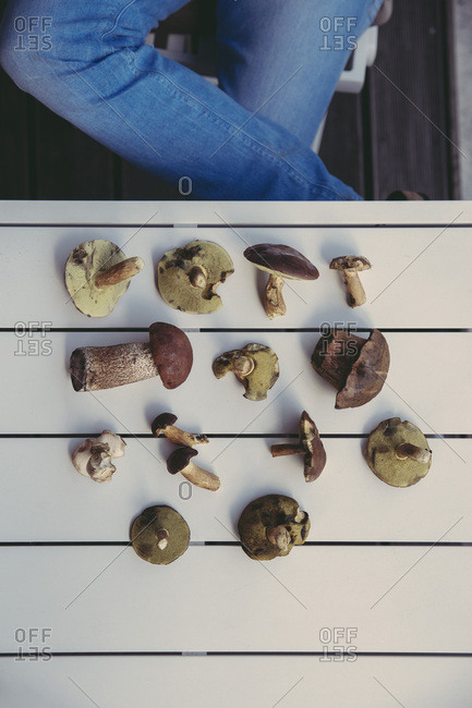 Collection of edible wild mushrooms on table